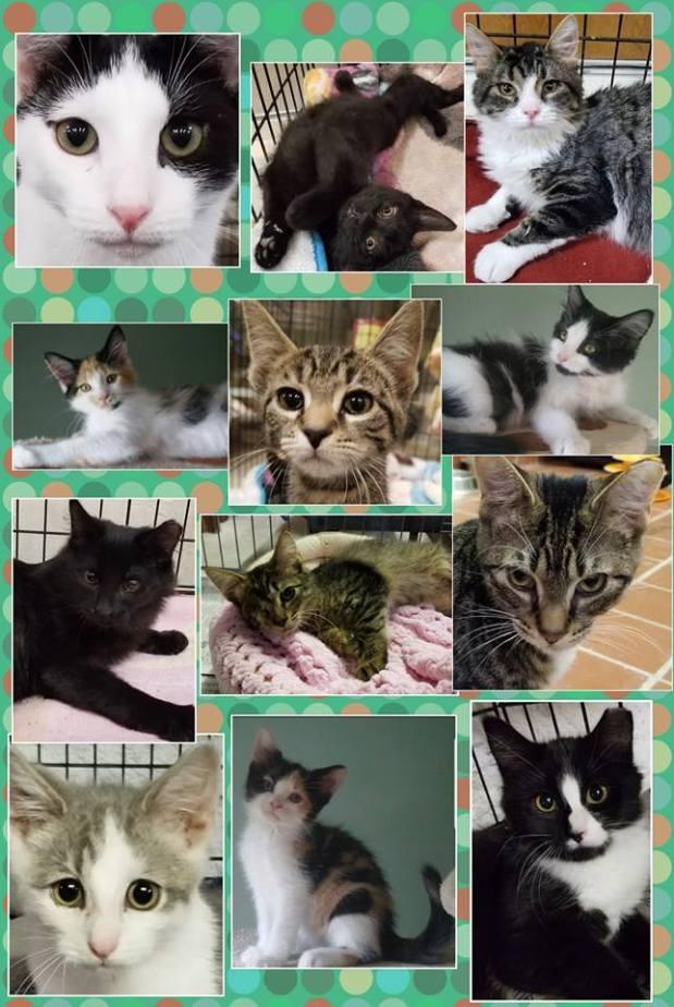 adoptionday
